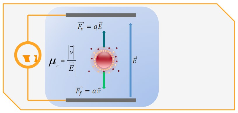 Schema Laser Doppler Electrophoresis WALLIS
